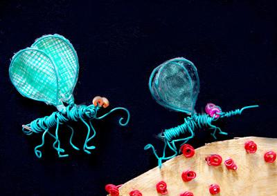 detail mosquitos