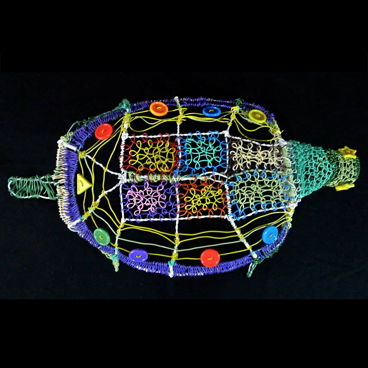 Turtle-top-view